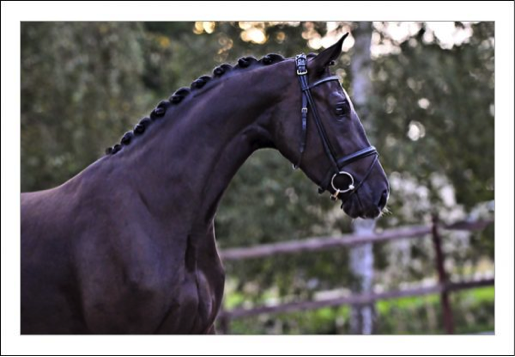 most expensive horse for sale
