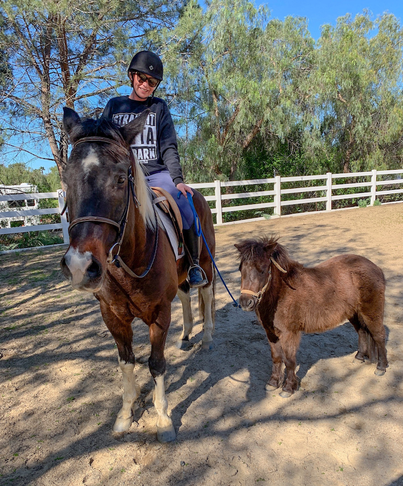 ponying my mini horse while riding my APHA gelding - riding horses in first trimester